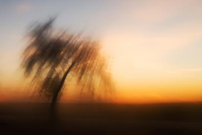 Obraz Strom ve svitu slunce
