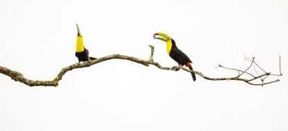 Obraz Minimalističtí tukani