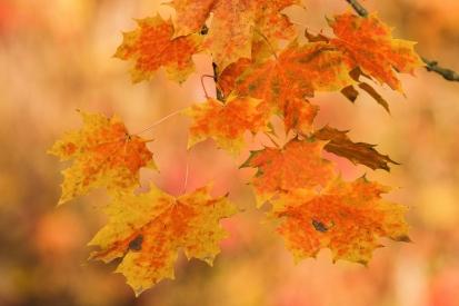 Obraz Podzimní listí