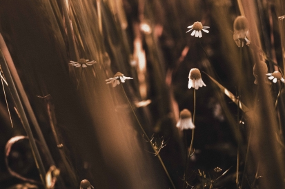 Obraz Letní tráva