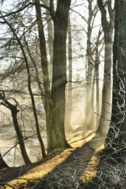 Obraz Mlžné ráno na hrázi