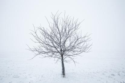 Obraz Zimní strom