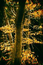 Obraz Zlatý podzim