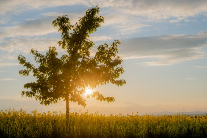 Obraz Západ slunce se stromem
