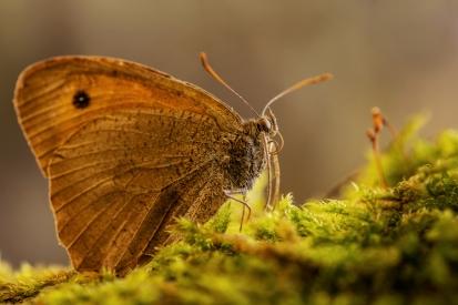 Obraz Motýl v mechu.