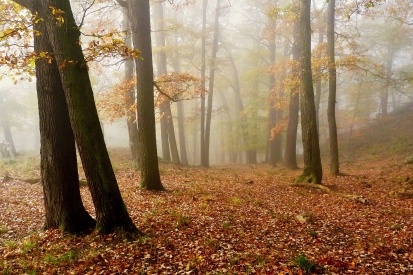 Obraz Dotek podzimu