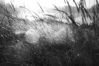 Obraz Ráno v trávě