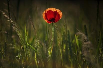 Obraz V trávě