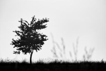 Obraz Silueta stromu