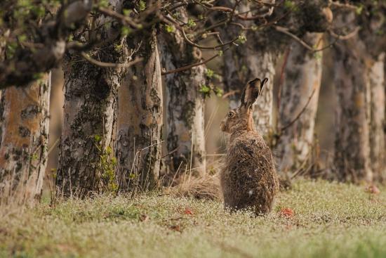 Obraz Zajíc v lese