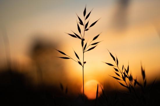 Obraz Zapadající slunce nad loukou