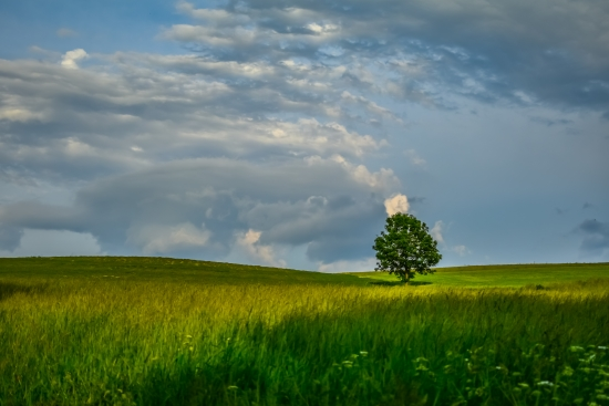 Obraz Strom v polích