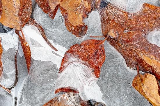Obraz Ledový podzim