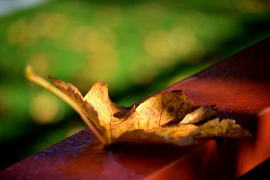Obraz Podzim