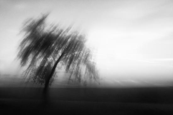 Obraz Strom v protisvětle