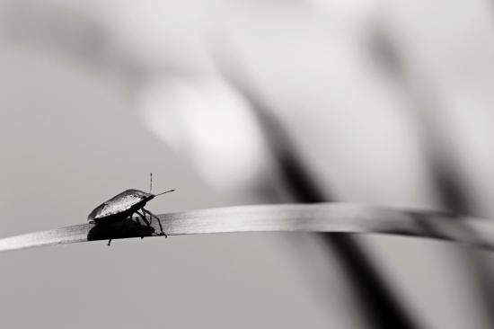 Obraz Výhled brouka