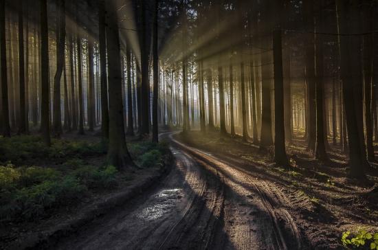 Obraz Světlo v lese
