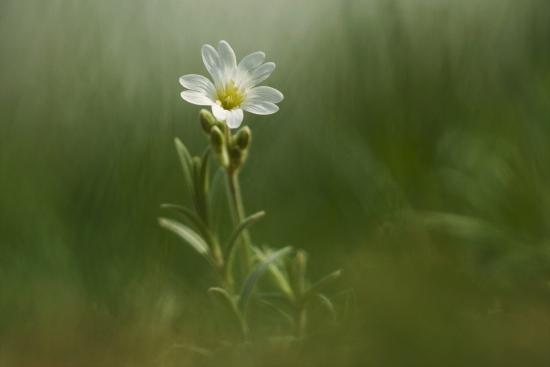 Obraz Bílý květ