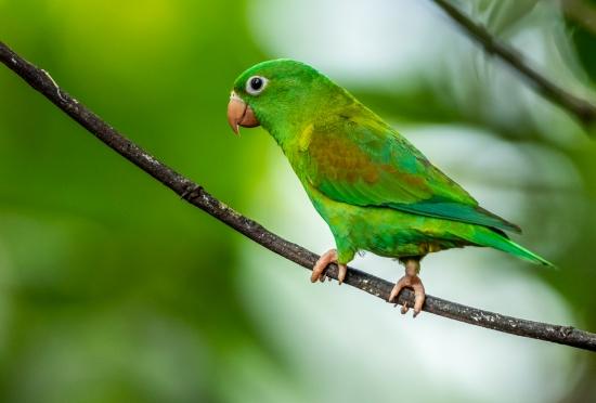 Obraz Portrét papouška