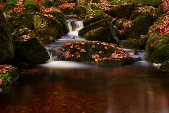 Obraz Lesní vodopád