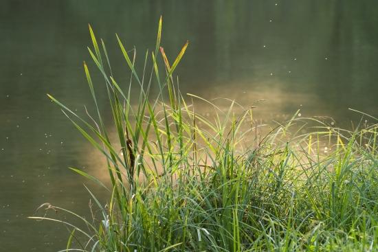 Obraz Ráno u vody