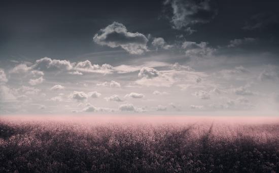 Obraz Kvetoucí snová louka