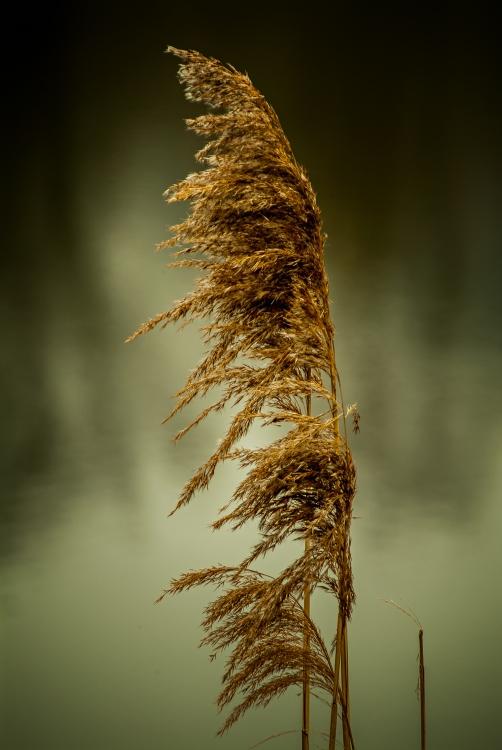Obraz Ve větru