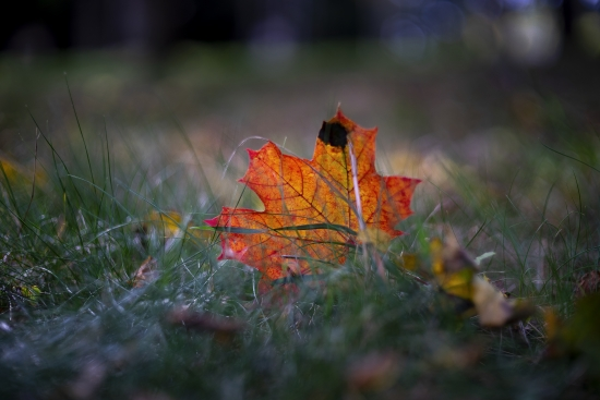 Obraz Podzim v trávě