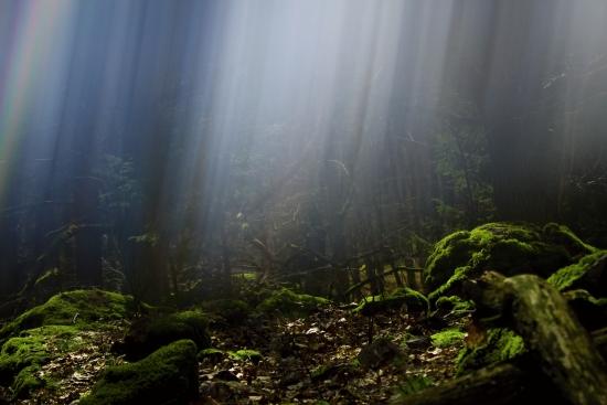 Obraz Tajemný les a paprsky světla