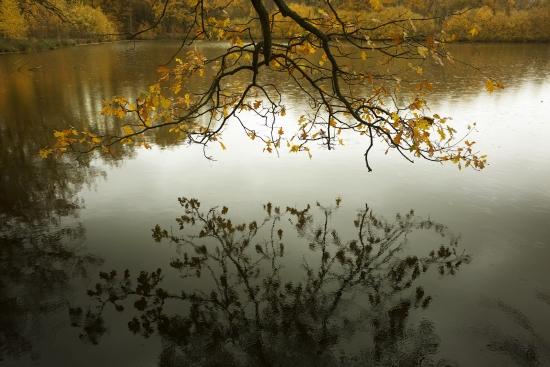 Obraz Podzim u vody