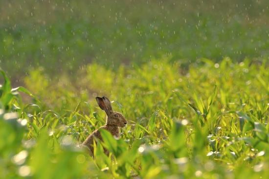 Obraz Prší