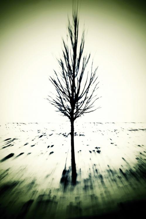 Obraz Strom v krajině