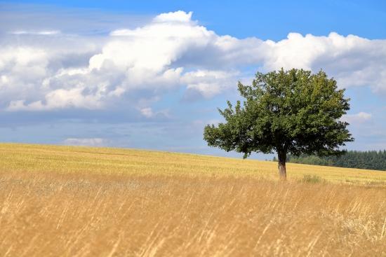 Obraz Soliterní strom