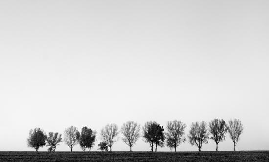 Obraz Černobílý obraz stromořadí